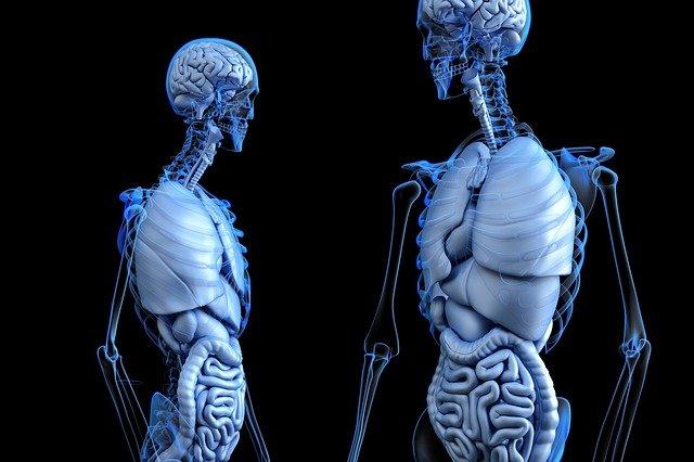 kostry, vnitřní orgány
